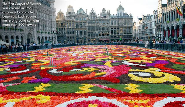 Carpet of flowers image 3